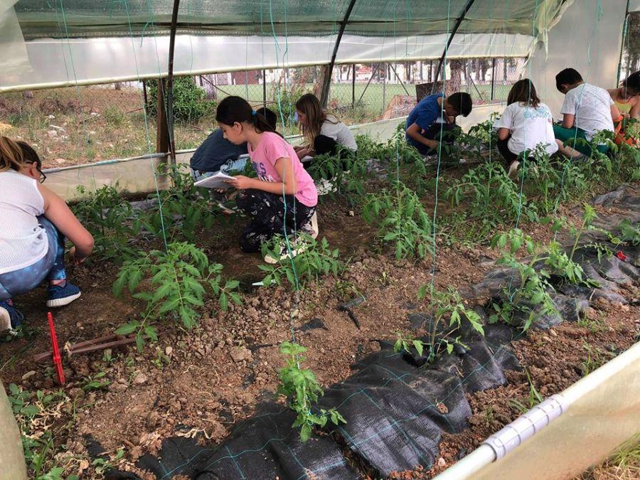 λαχανόκηπος που έφτιαξαν μαθητές