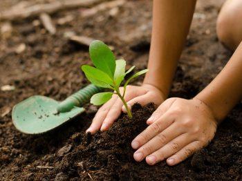 δέντρα για να αποφοιτήσει