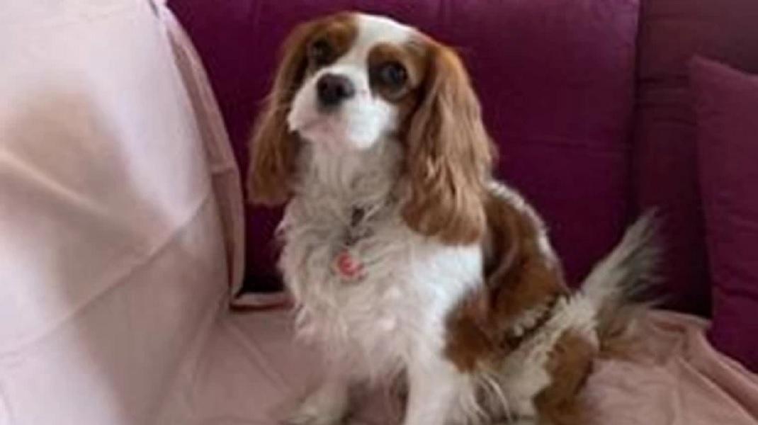 Ιωάννινα: Σκότωσε τον σκύλο της ανιψιάς του μπροστά στα μάτια της